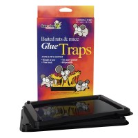 GLUE TRAPS RATS AND MOUSE #12402
